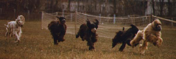 Training dogracing - autumn 1996